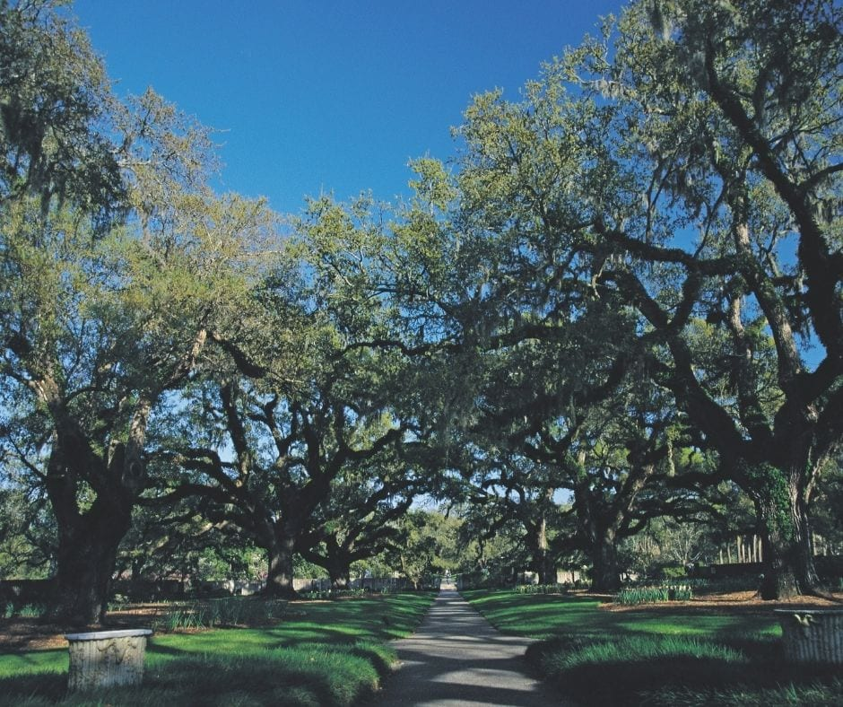 Walkway through large trees