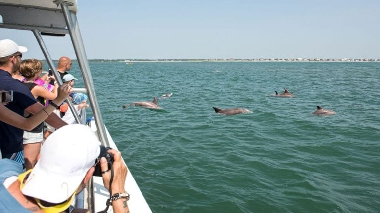 People on a Dolphin Watching Cruise
